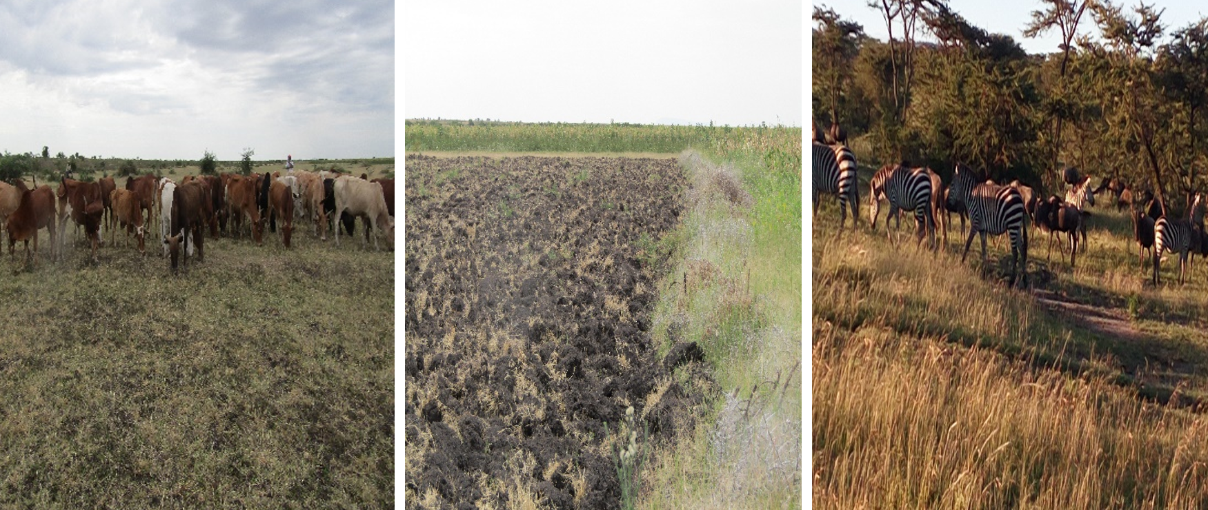 Photo showing different land uses where research is carried out. From left; grazing land, Agricultural land and Protected area. Photo: Monica Shilereyo, 2016