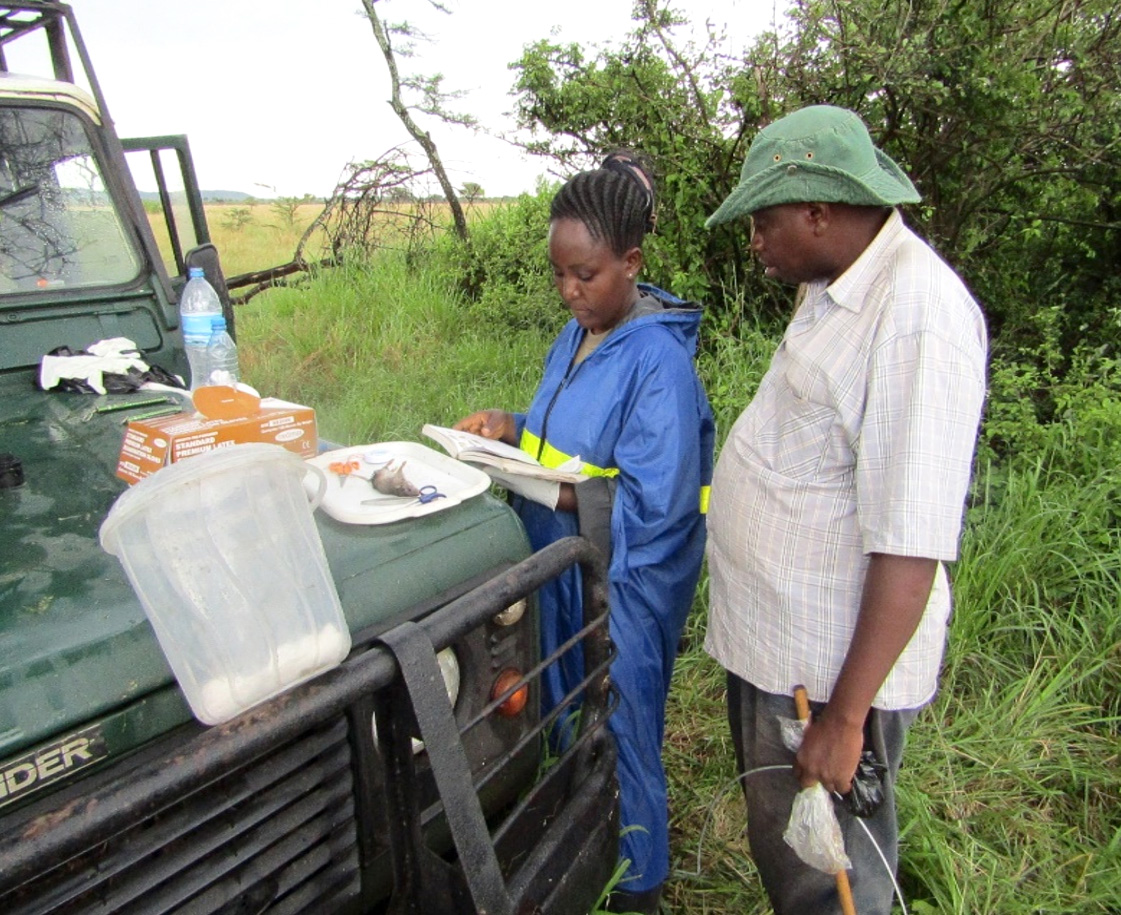 Dr. Nkwabi (small mammal expert) and I identifying a rodent before dissection process. Photo; Hery Lema, 2016.