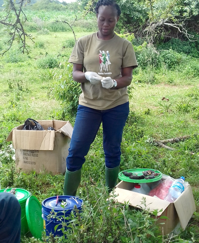 Dr. Magige (My supervisor) assisting in the identification and preservation of voucher specimen at Maalon village, Loliondo district. Photo; Monica Shilereyo, 2017