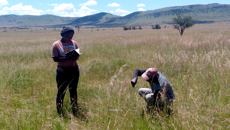 Vegetation sampling during wet season in the Serengeti grassland. Photo; Amiri Swalehe 2017