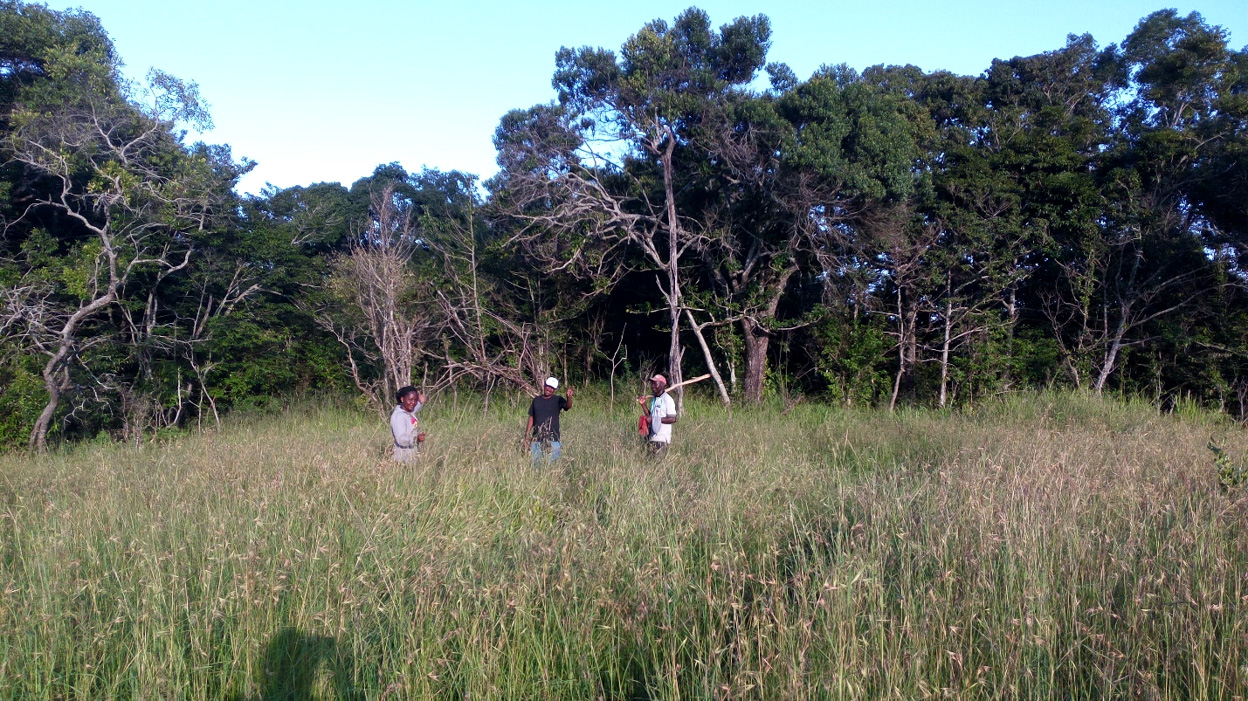 Ingira forest, (within Serengeti National Park, North) one of the habitat where trapping was conducted.