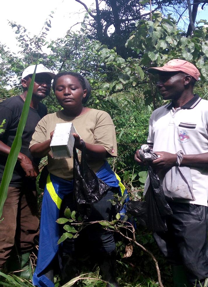 Amiri Swalehe (driver), Raymond Okiky (TAWIRI Botanist) and I carefully looking at animal trapped in a Sherman trap. Photo; Izack George, 2017