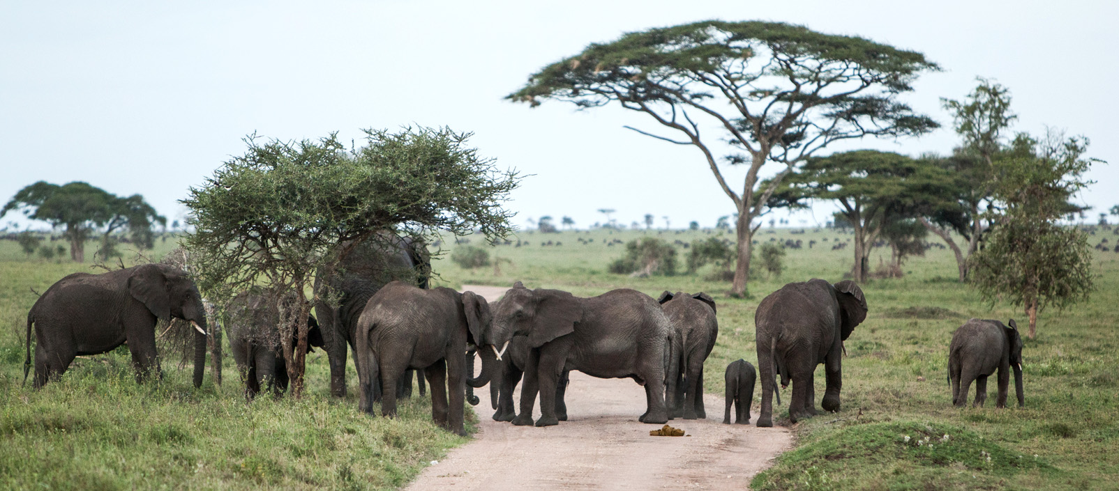 Photo: Per Harald Olsen/AfricanBioServices
