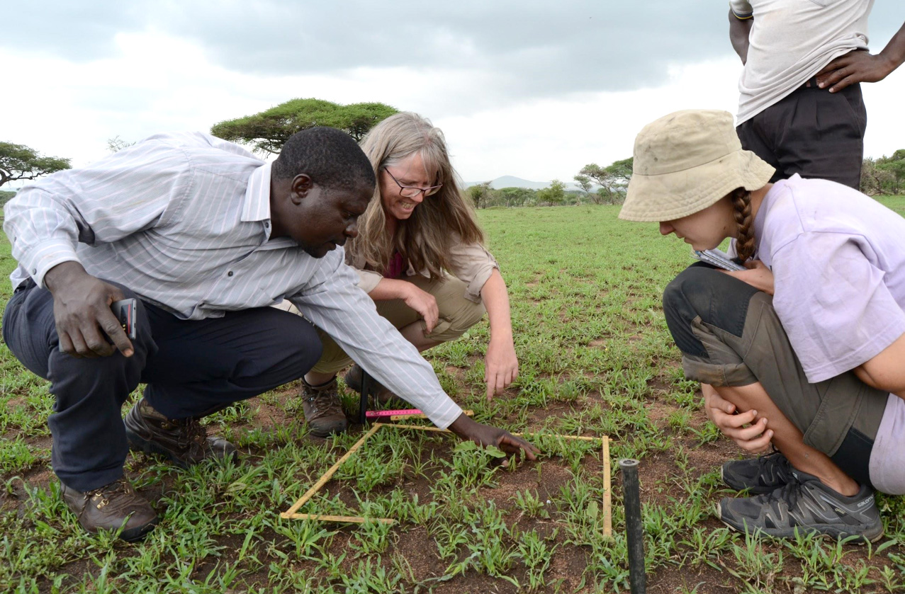 Our experienced botanist Bukombe teaching prof. Bente Graae (NTNU) and Marit about the local plant species.