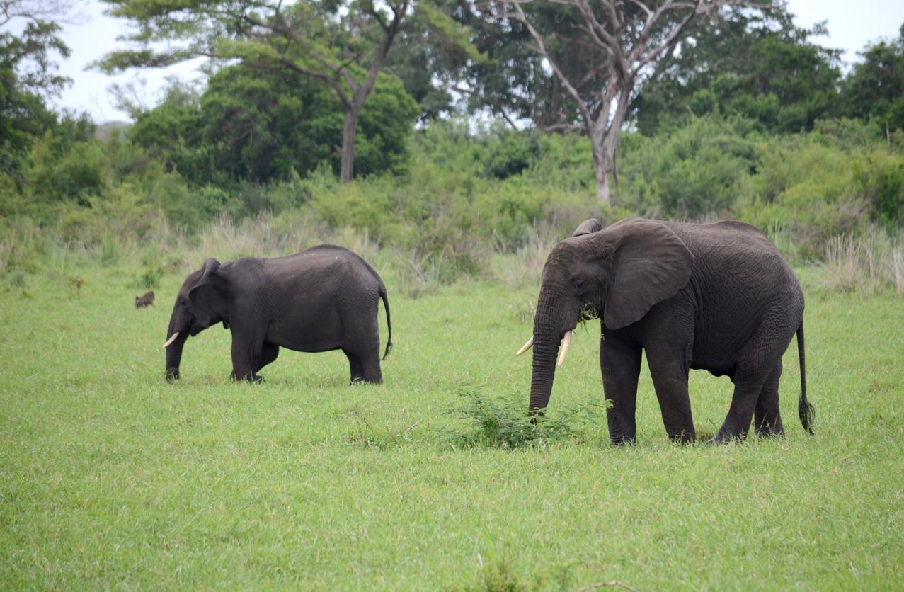 Elephants by Handajega gate.