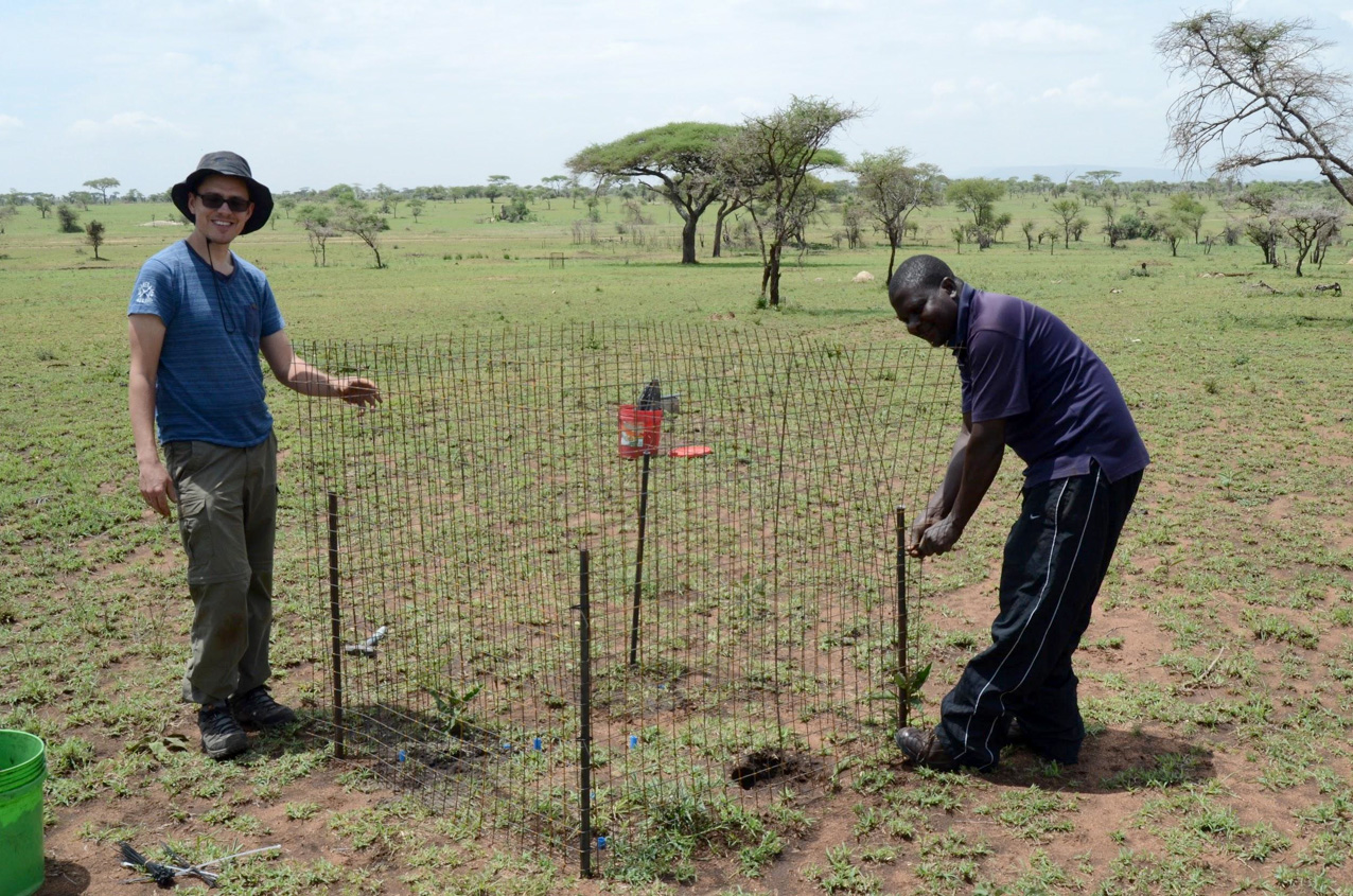 Ass. prof James Speed (NTNU) and Dr. John Bukombe (TAWIRI) setting up a metal mesh cage for the transplant experiment.